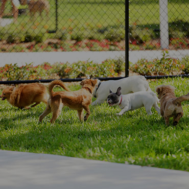 Large Dog Park at North Metro Town Homes Apartments